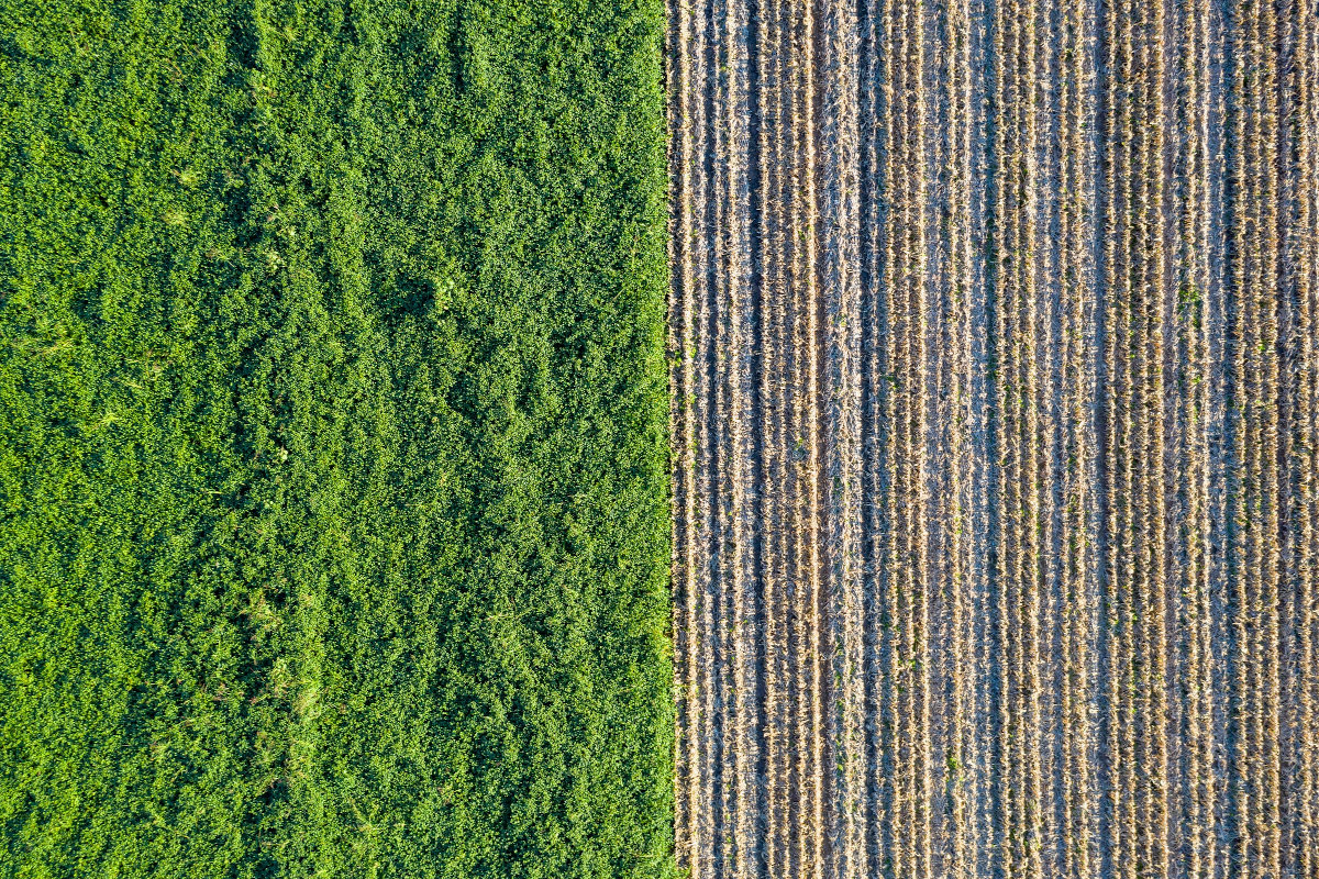 Kwantificering van biomassa